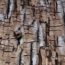 Bark Greys and Browns 100% Cotton Fabric Print